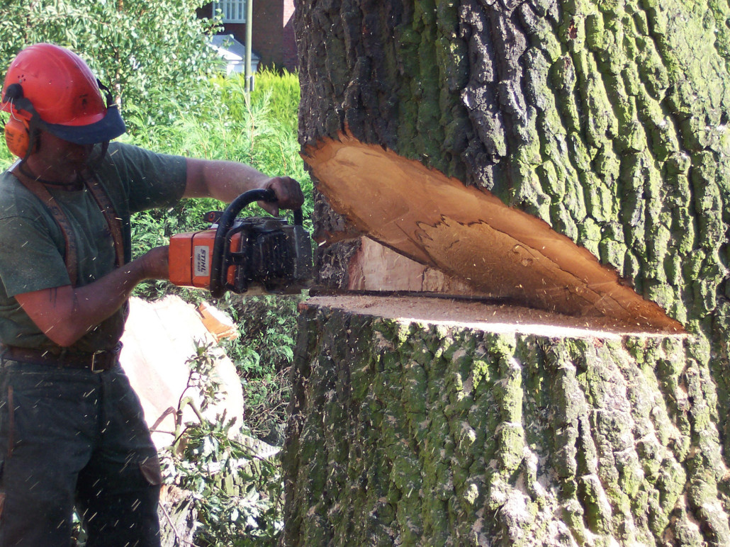 removing-massive-tree-with-chainsaw