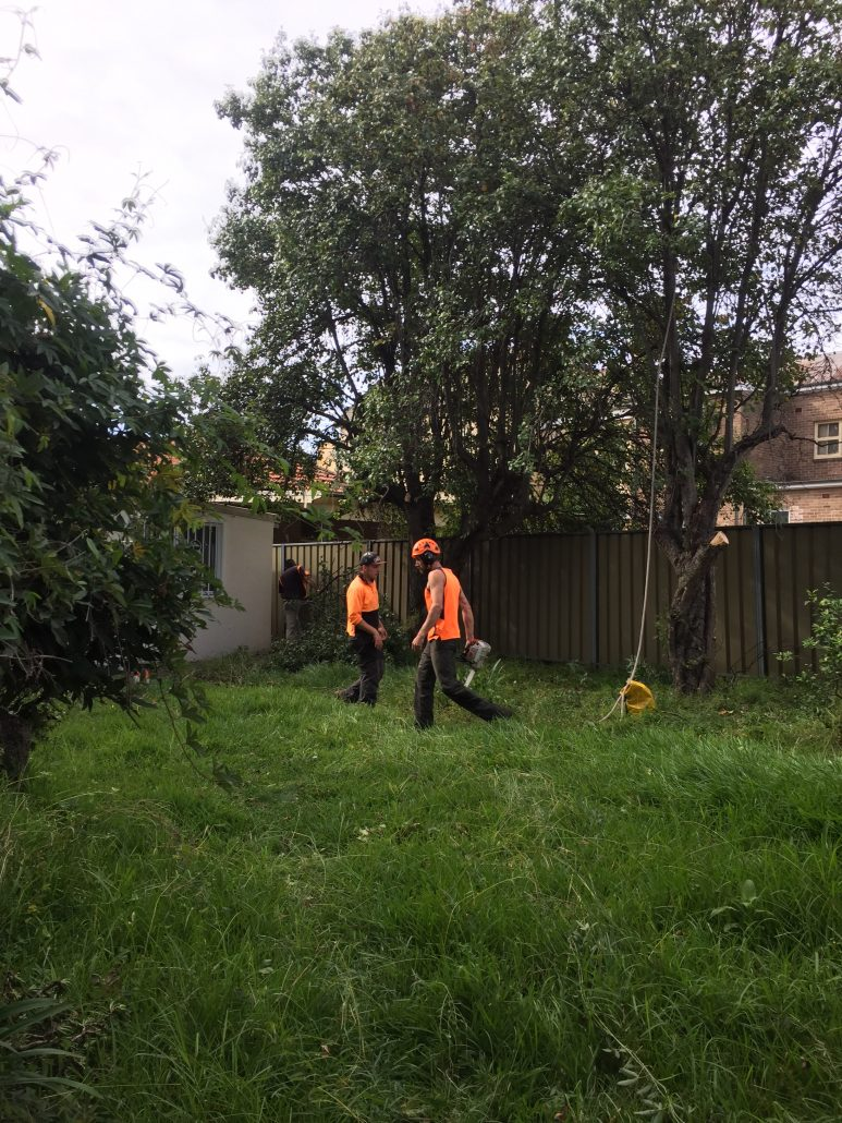 Tree removal Burwood