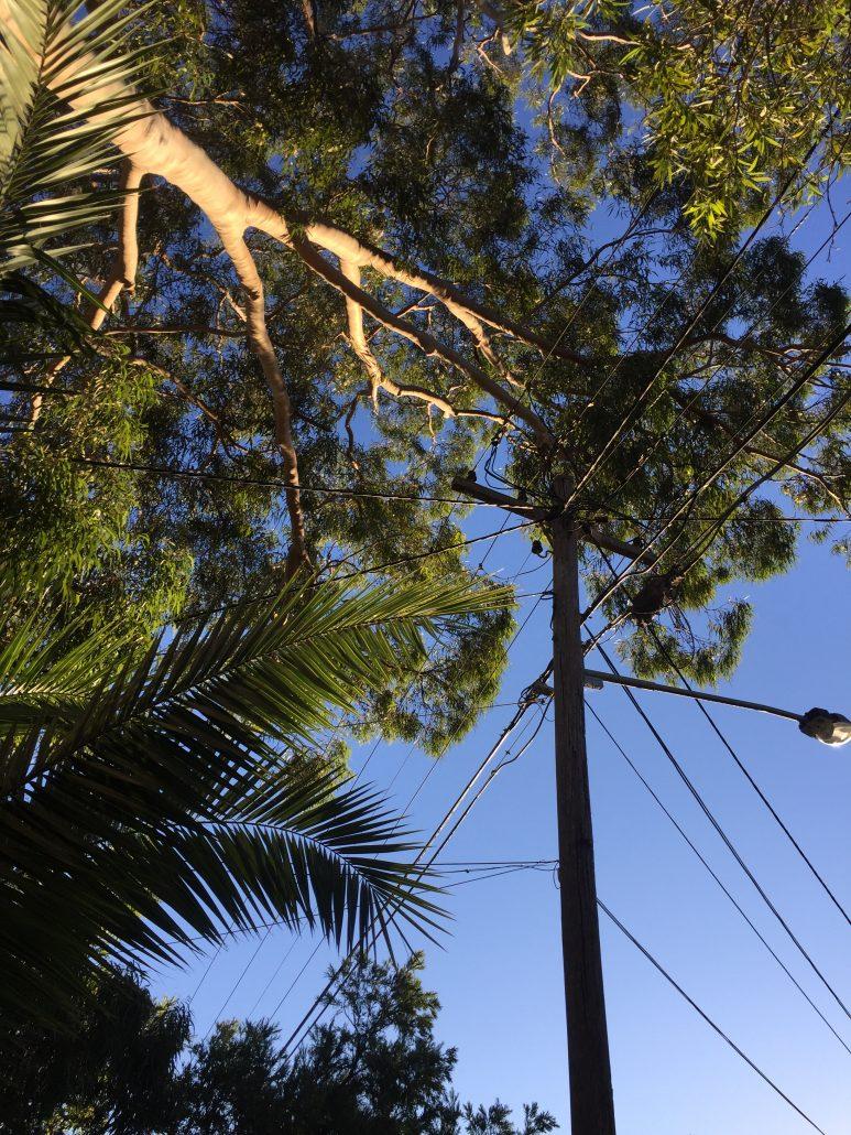 Power Line Tree