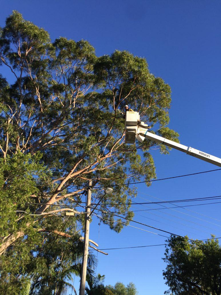 Boom lift accesses tree