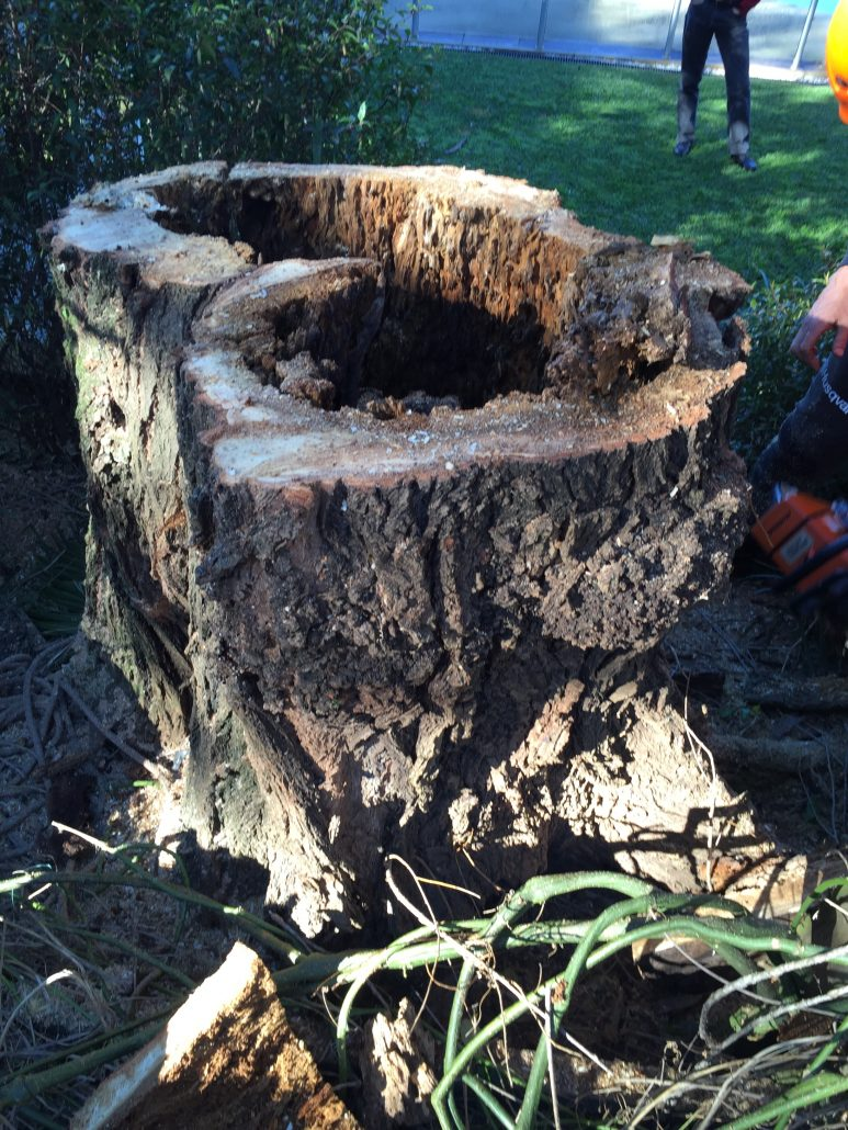 tree assessments are essential