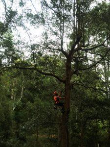 risk-assessment-tree-climbing