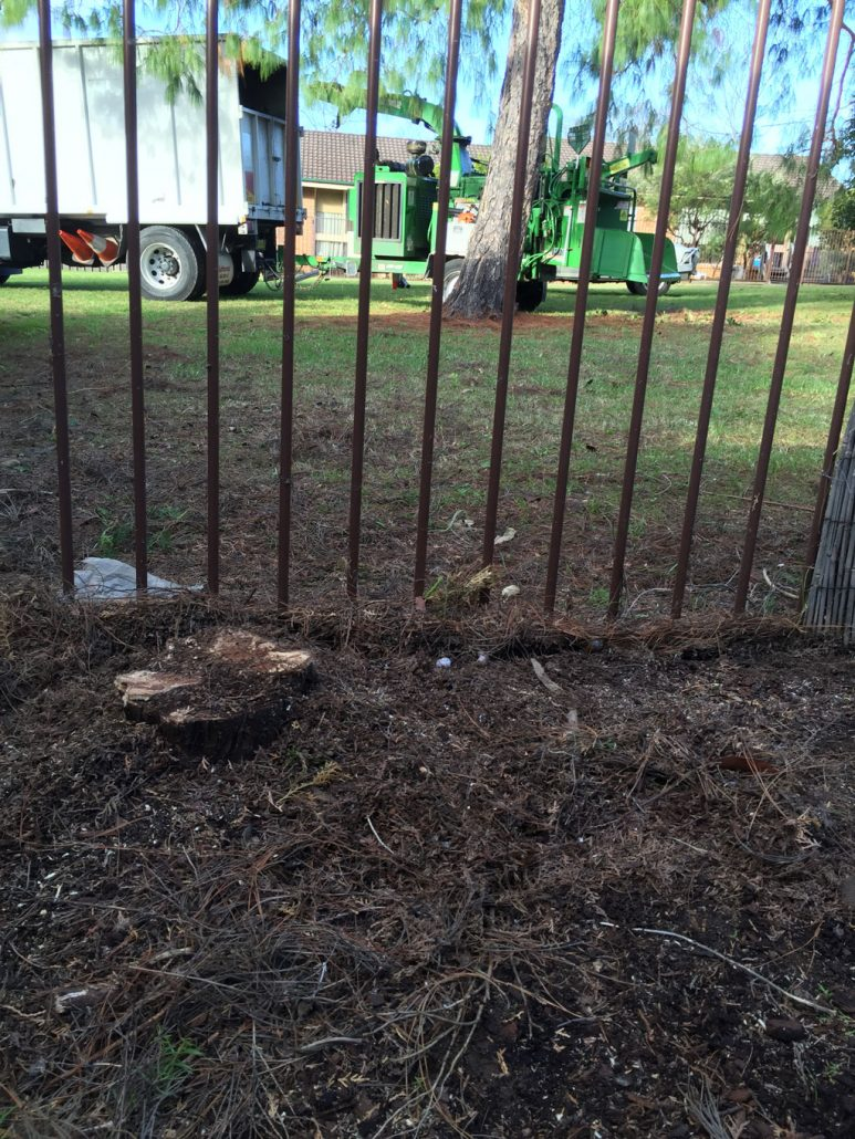 Tree removal in Caringbah