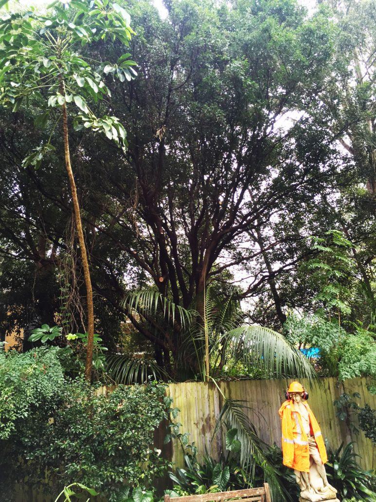 Neighbour-tree