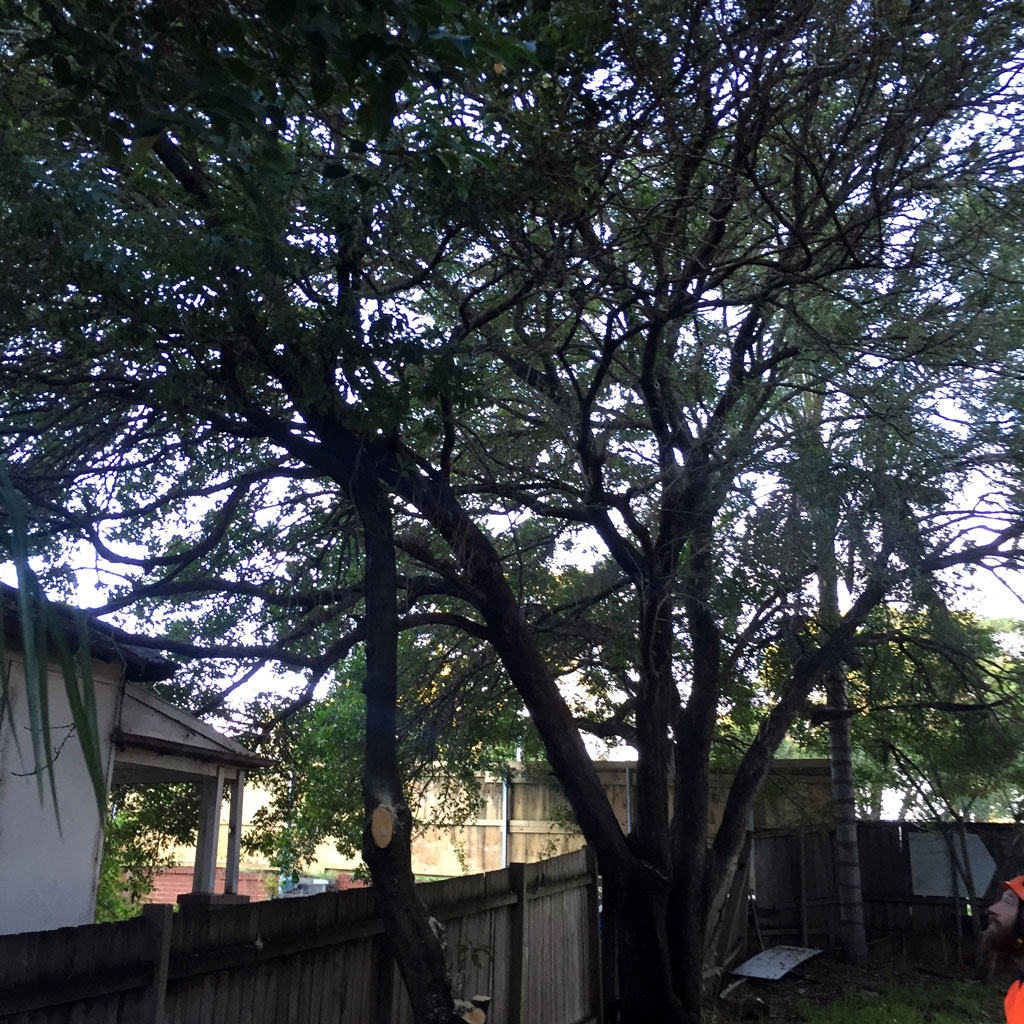parramatta-tree-services