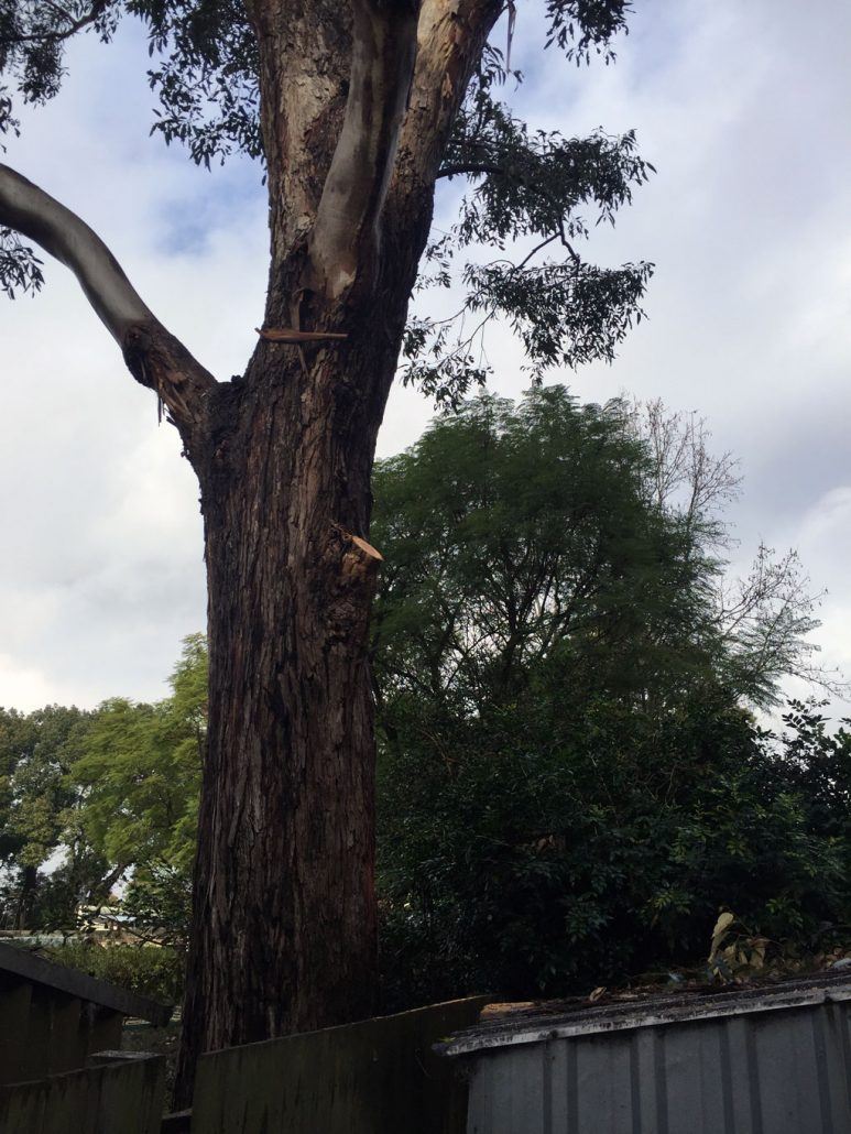 tree-surgery-in-summer-hill