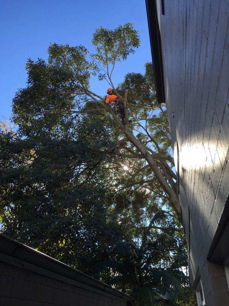 arborist-in-place-sydney