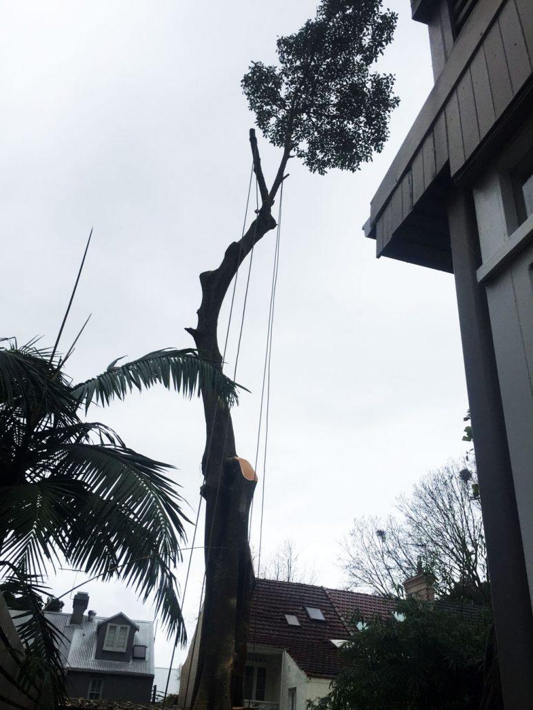 arborist-success