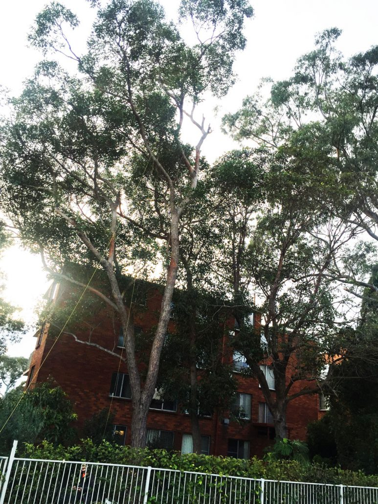 The trees are obstructing the natural light in the units