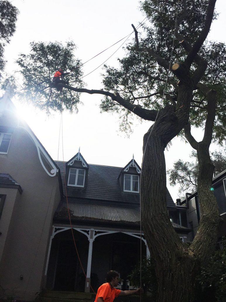 arborists-tree-surgery