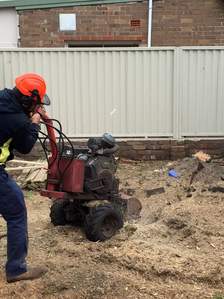 stump-grinding-randwich