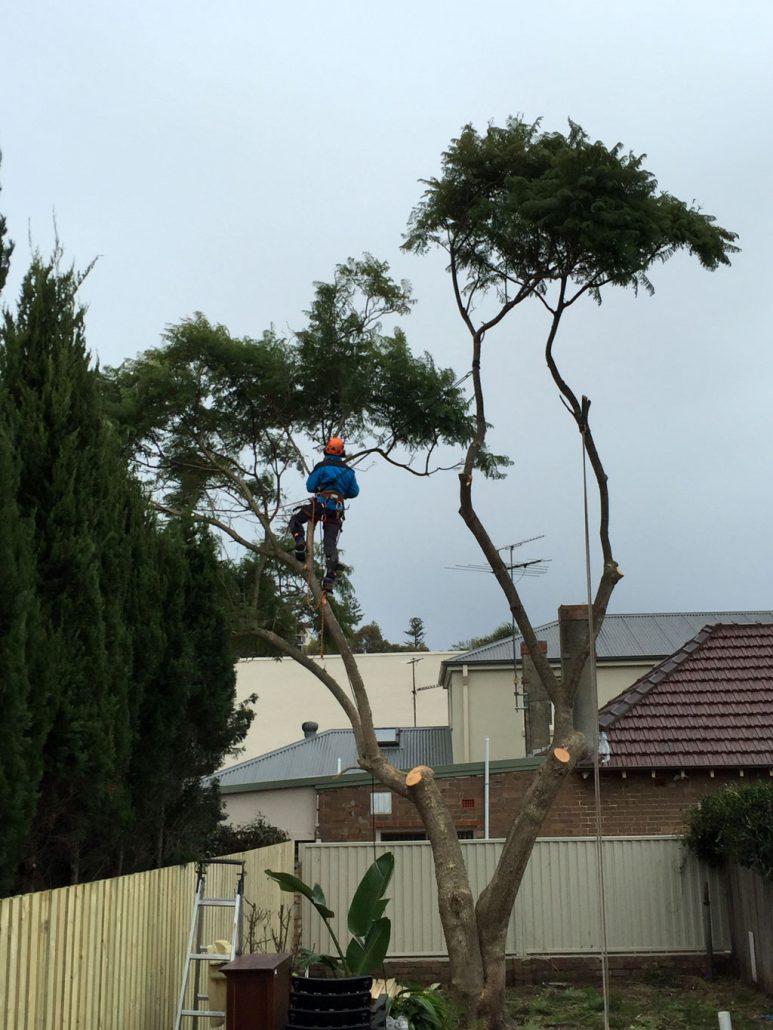amazing-arborist