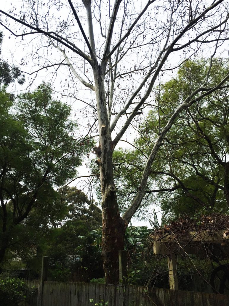 neighbour-tree-pruning