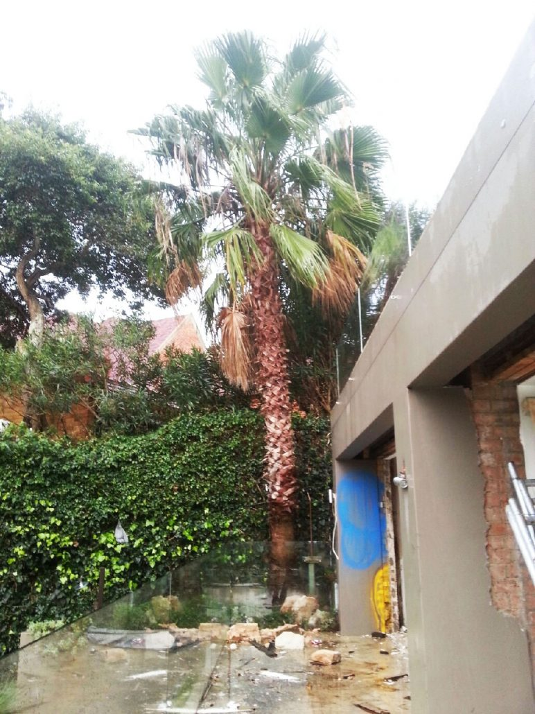 palm-tree-removal