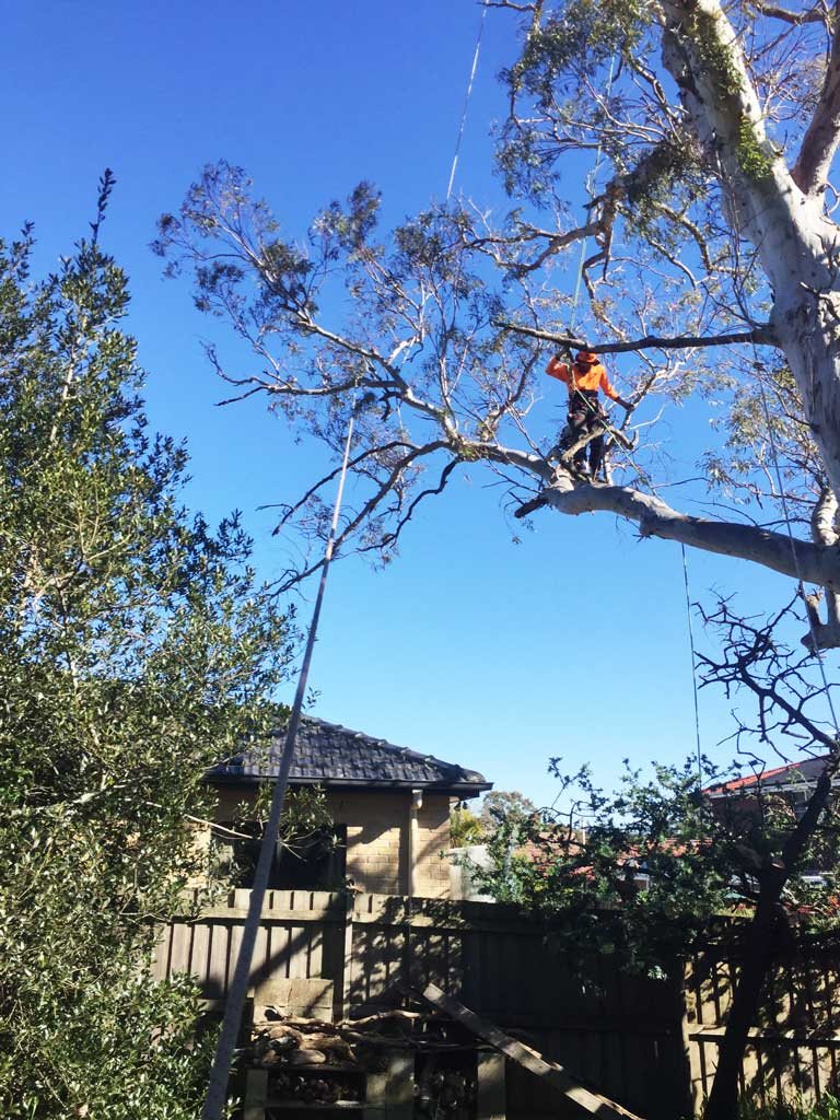 Pruning to satisfy neighbour
