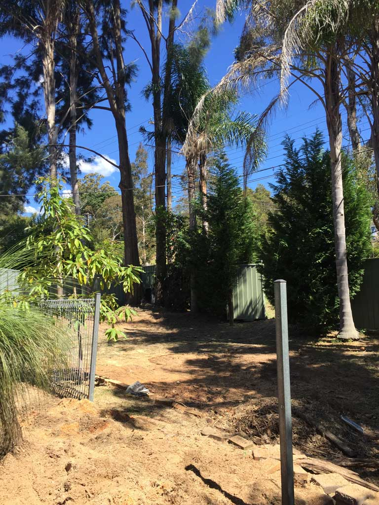 Palm Removal in Hornsby