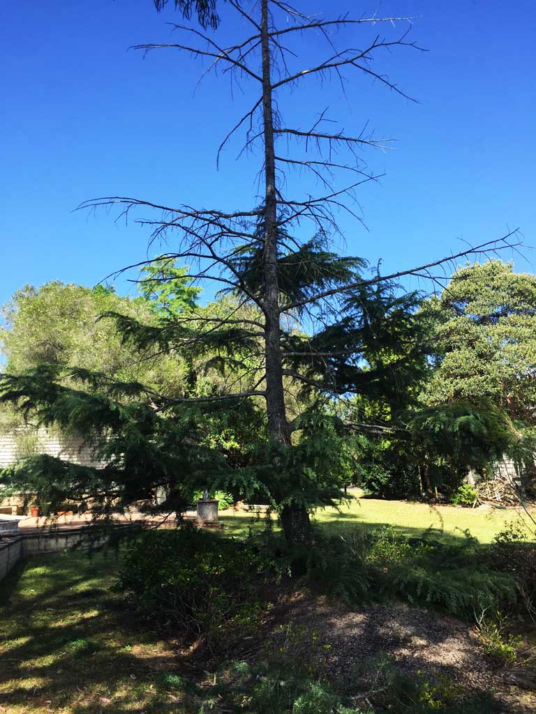 Mulgoa Tree Removal